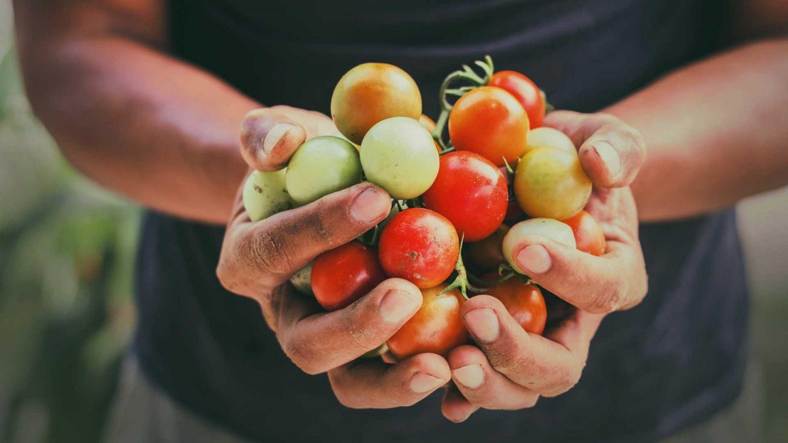 sementi per agricoltura e frutta verdura