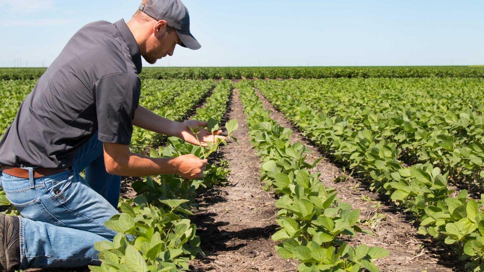 Agricoltura e Attrezzature per agricoltura professionali